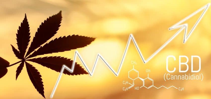 Hoja de cannabis, primer plano de marihuana en el fondo del sol poniente con rayos de luz con flecha en tendencia alcista