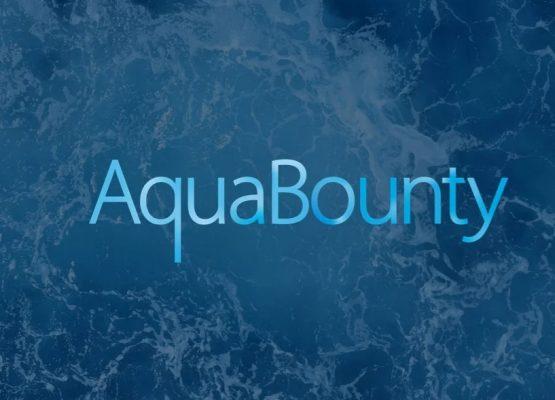 AquaBounty nada en efectivo a medida que crecen sus piscifactorías